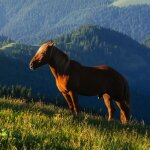 Die Leber nimmt im Pferdeorganismus eine...
