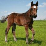 Futtermittel für die Pferdezucht