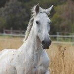 Pflegeprodukte für Pferde
