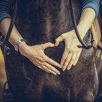 Das Herz des Pferdes ist ein vergleichsweise...