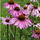 Natusat Echinacea purpurea Presssaft 250 ml