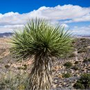 Natusat Yucca schidigera 1 kg