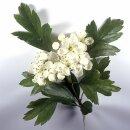 Natusat Weißdornblätter mit Blüten...